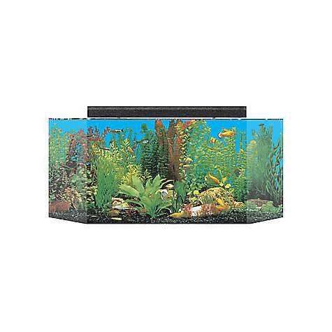 SeaClear Flatback Hexagon Aquarium Combos in Clear