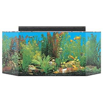 Seaclear flatback hexagon aquarium combos petco for Fish tank and stand combo