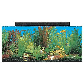 Seaclear rectangular 30 gallon show aquarium combos petco for 55 gallon fish tank petco