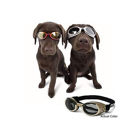 Doggles Protective Eyewear for Dogs