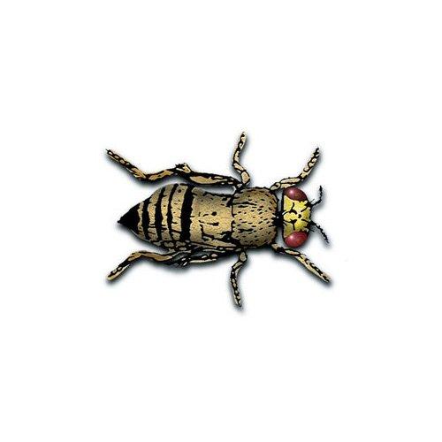 Flightless Fruit Flies- d.melanogaster