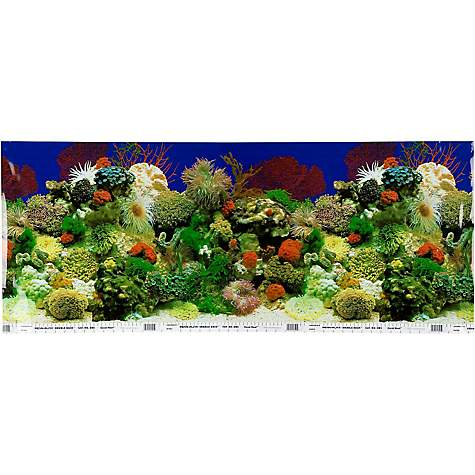 Petco Double Sided Amazon Aquarium Background Petco