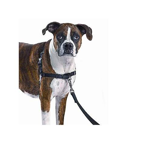 PetSafe Gentle Leader Easy Walk Harnesses for Dogs - Gentle Leader