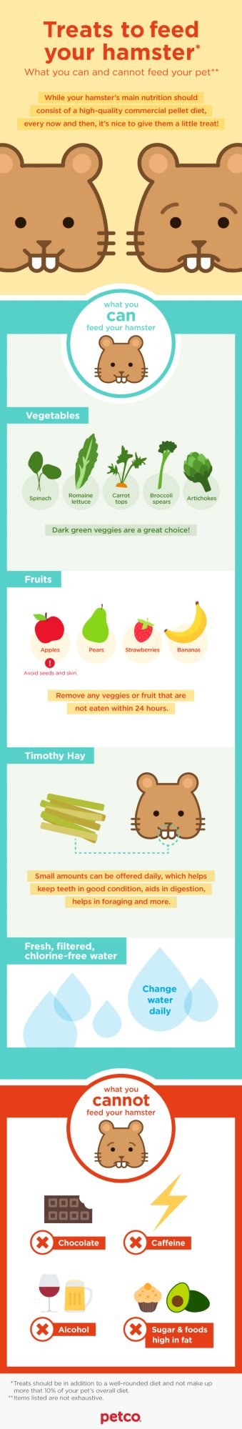 Hamster Treat Infographic