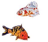 Fish store live pet aquarium fish petco for Petco koi fish