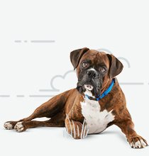 Dog & Puppy Supplies, Services & Accessories | Petco