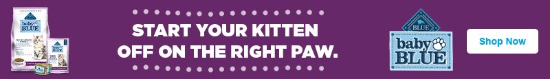 Start Your Kitten Off on the Right Paw - Baby BLUE - Shop Now