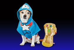 2e3f661e0c3 Dog & Puppy Supplies, Services & Accessories   Petco