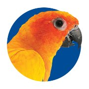 Featured Categories - Conure Shop