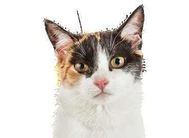 Cat Food Odor Control