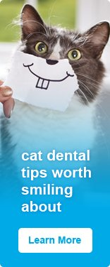 Cat Dental Tips worth Smiling about - Learn More
