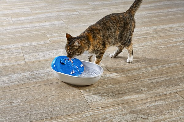 Budgeting Your First Year of Kitten Supplies | Petco