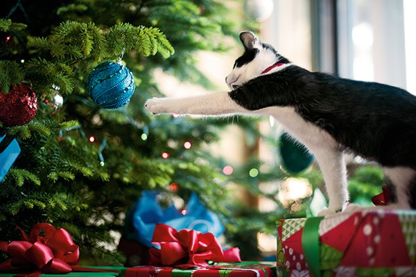 you can also use bitter training aids to keep your pet away from your tree most contain scents that will deter your pet