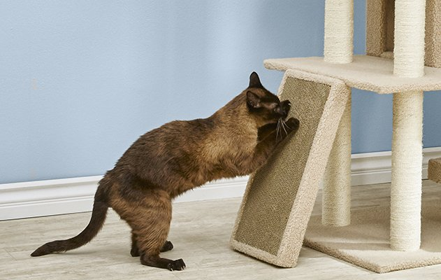 How To Get A Cat Stop Scratching Petco