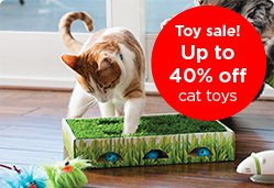 Toy sale! Up to 40% off cat toys