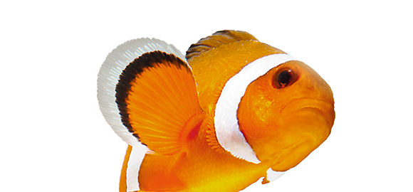 for fish - Picture Of Fish
