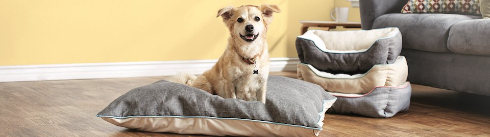 Prime Finding The Best Dog Bed For Your Pup Petco Gmtry Best Dining Table And Chair Ideas Images Gmtryco