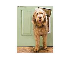 Dog Gates, Doors & Pens: Indoor & Outdoor Pet Gates | Petco