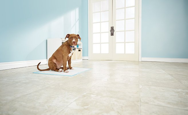 dog sitting on a puppy pad. puppy potty training tips