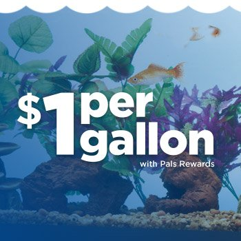 $1 Per Gallon - Choose from 10G, 20G, 20L and 29G Aqueon Open-glass Aquariums when you buy online & pick up in-store - Shop Now