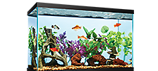 $1 per gallon Aqueon Open-glass Aquariums