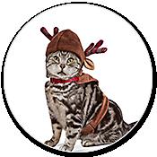 Petco Pet Holiday Christmas Shop Petco