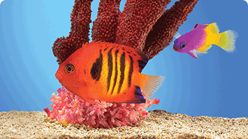 Five Surprising Facts About Your New Saltwater Fish