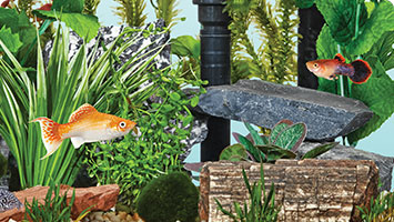 Petco's Guide to Aquatic Success