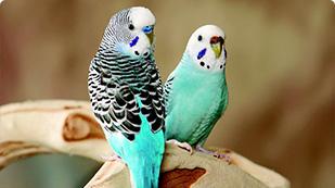 Bird Supplies Checklist for Parakeets, Cockatiels & Conures