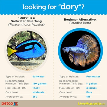 Finding dory in your home petco for How much does a fish cost