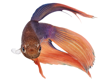 fish supplies fish food fish tanks and more petco
