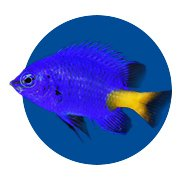Featured Categories - Saltwater Fish Shop
