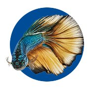 Featured Categories - Betta Fish Shop