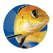 Featured Categories - Cichlid Shop