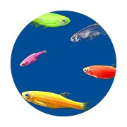Featured Categories - GloFish Shop