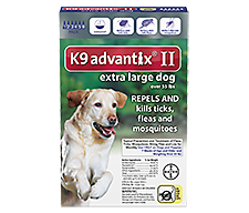 Best And Newest Flea Treatment For Dogs