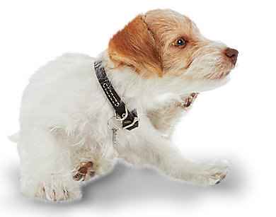 Up to 45% off flea & tick solutions!