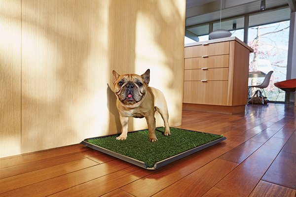 How To Potty Train A Puppy Tips For New Pet Parents Petco