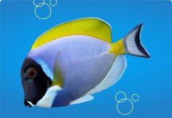 Fish Store: Live Pet Aquarium Fish   Petco
