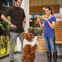 Dog & Puppy Training Classes | Petco