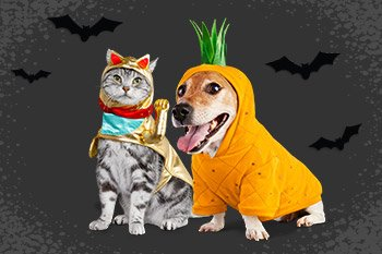 Up to 50% off - Halloween Shop - Shop Now