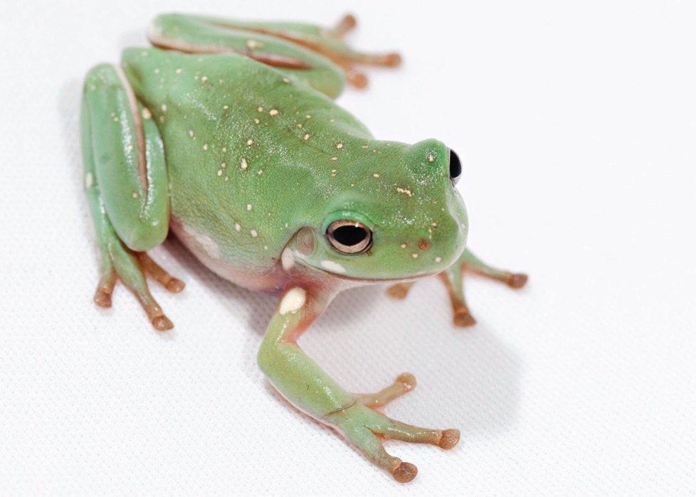 Pet Store Frog Food