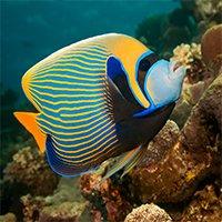 New pet guides saltwater fish petco for Petco saltwater fish