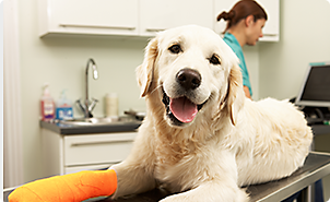 Pet supplies pet food and pet products petco pet insurance quotes solutioingenieria Gallery