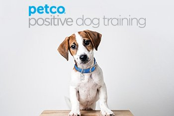 Petco Positive Dog Training
