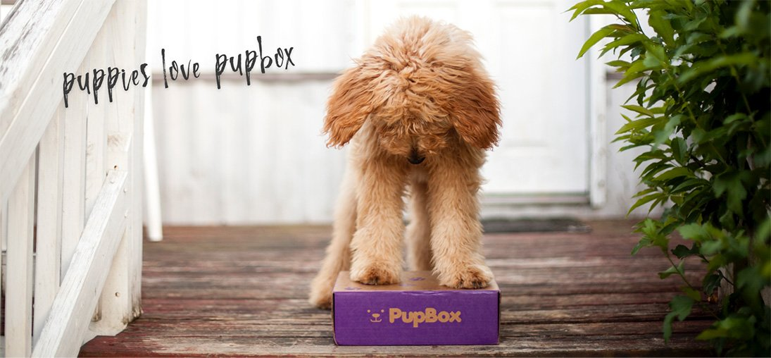 Puppies love pupbox banner