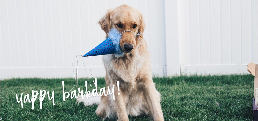 Yappy Barkday banner