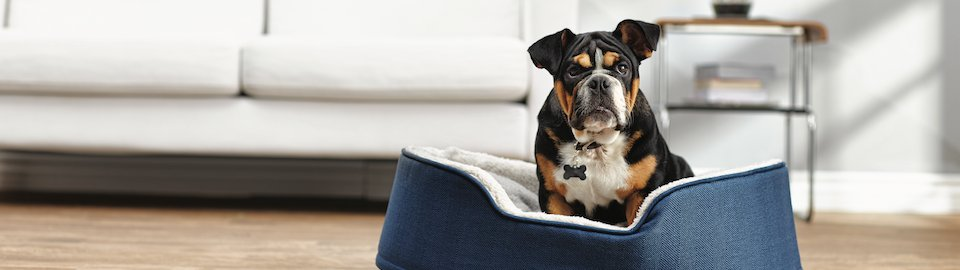 How Much, and How Often, Should I Feed My Puppy | Pet Care