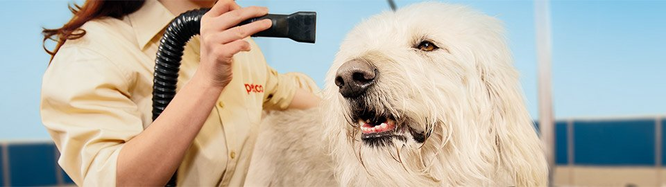 Pet Resource Center Grooming Articles Petco