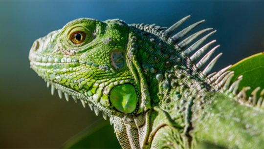 Are you ready for a Pet Reptile?